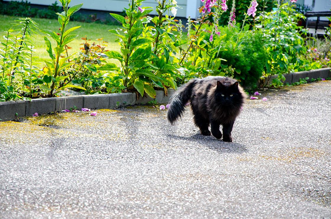 katten-elton