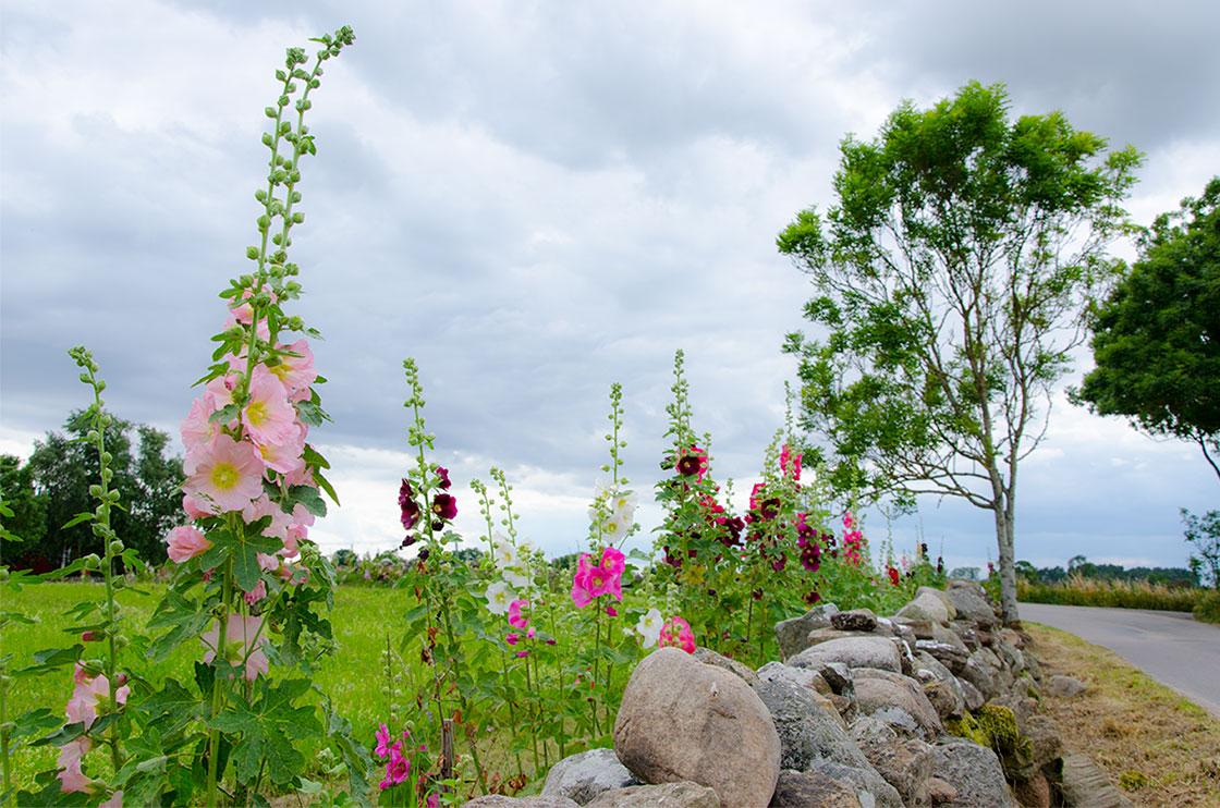 blomsterang